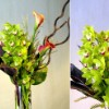 Showy Mixed Tropical Vase Arrangement {As shown $140.00}